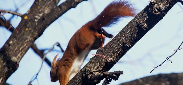 Quelques photos d'écureuils !