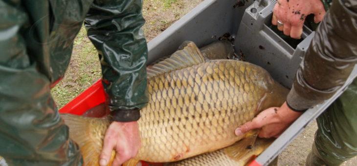 Pêche à l'étang d'Assay